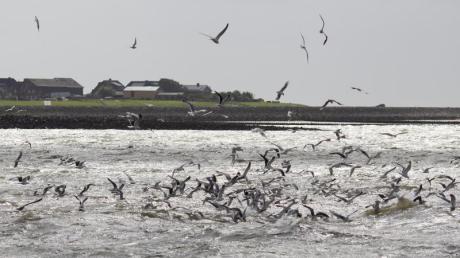 Laut einer neuen Studie entweicht Methan aus alten Bohrlöchern in der Nordsee.